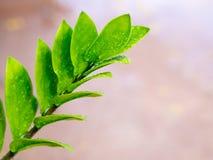 foglio verde con le gocce dell'acqua Fotografia Stock