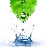 Foglio verde con le gocce dell'acqua e spruzzata isolata sopra Immagine Stock Libera da Diritti