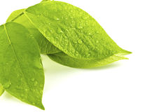 Foglio verde con le gocce di acqua Fotografia Stock