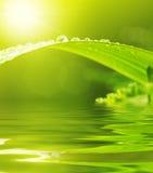 Foglio verde con le gocce di pioggia Fotografia Stock Libera da Diritti
