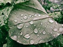 Foglio verde con le gocce di rugiada Fotografia Stock
