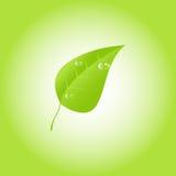 Foglio verde con le gocce di rugiada Vettore ENV 10 Fotografia Stock