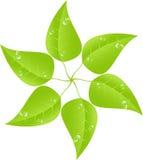 Foglio verde con le gocce di rugiada Vettore ENV 10 Fotografie Stock