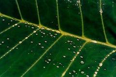 Foglio verde con le goccioline della pioggia Fotografia Stock Libera da Diritti