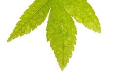 Foglio verde con le goccioline di acqua Fotografie Stock