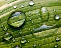 Foglio verde con le goccioline di acqua Fotografia Stock Libera da Diritti