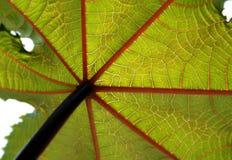 Foglio verde del fiore Fotografia Stock