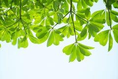 Foglio verde del primo piano immagine stock