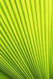 Foglio verde della felce Fotografie Stock Libere da Diritti