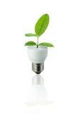 Foglio verde della lampada Fotografia Stock