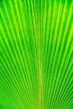 Foglio verde della priorità bassa Fotografie Stock
