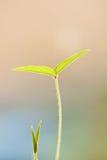 Foglio verde di Yougn con profondità del campo poco profonda Fotografie Stock Libere da Diritti