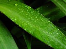 Foglio verde dopo pioggia Fotografia Stock Libera da Diritti