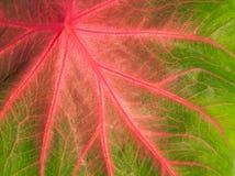 Foglio verde e dentellare variopinto Fotografia Stock Libera da Diritti