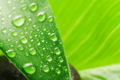 Foglio verde e pietra grigia Fotografia Stock Libera da Diritti