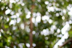 Foglio verde in foresta Fotografie Stock Libere da Diritti