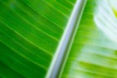 Foglio verde in foresta Fotografia Stock