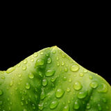 Foglio verde fresco Fotografia Stock