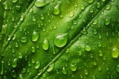 Foglio verde fresco Fotografia Stock Libera da Diritti