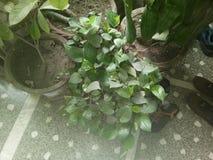 Foglio verde isolato fotografia stock
