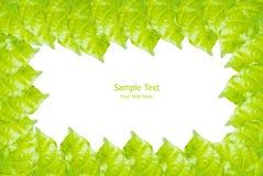 Foglio verde isolato sul bianco. Fotografia Stock Libera da Diritti