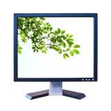 Foglio verde nel video dell'affissione a cristalli liquidi isolato Fotografia Stock Libera da Diritti