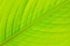 Foglio verde per priorità bassa fotografia stock libera da diritti