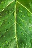 Foglio verde scuro fotografie stock libere da diritti