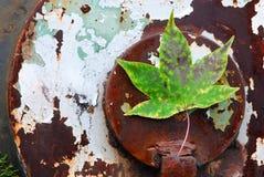 Foglio verde su priorità bassa fotografia stock