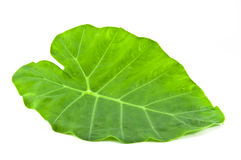 Foglio verde su priorità bassa bianca Fotografia Stock