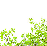 Foglio verde su priorità bassa bianca immagini stock libere da diritti