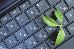 Foglio verde sul computer portatile Fotografia Stock Libera da Diritti