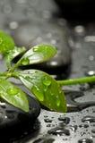 Foglio verde sulla pietra della stazione termale Fotografia Stock Libera da Diritti