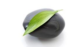 Foglio verde sulla pietra nera Immagini Stock