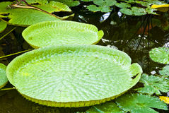 Foglio verde tropicale Fotografie Stock