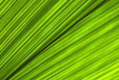 Foglio verde tropicale - priorità bassa astratta Immagini Stock Libere da Diritti
