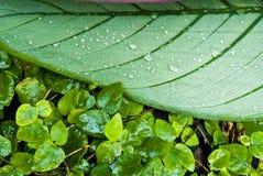 Foglio verde tropicale - sottragga la priorità bassa Fotografie Stock Libere da Diritti