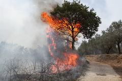 Fogo da árvore Fotos de Stock Royalty Free