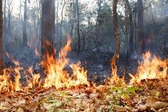 Fogo de Bush na floresta tropical foto de stock royalty free