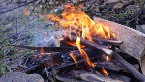 Fogo de madeira Fotos de Stock