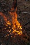 Fogo do acampamento na queimadura da floresta da noite foto de stock royalty free