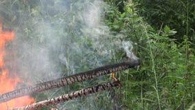 Fogo na catástrofe de Eco da floresta na natureza 4K filme