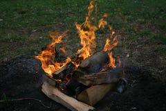 Fogo na floresta Fotos de Stock Royalty Free
