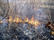 Fogo na floresta Fotos de Stock