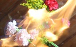 Fogo na planta e na flor fotografia de stock royalty free
