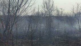 Fogo nas madeiras com um fumo forte video estoque