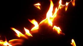Fogo que queima-se no fundo preto video estoque