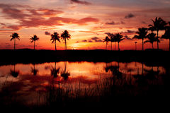 Fogo tropical de Sun Fotografia de Stock