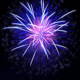 Fogos-de-artifício coloridos no céu preto Fotografia de Stock Royalty Free