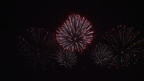 Fogos-de-artifício coloridos no fundo preto 4K do céu vídeos de arquivo